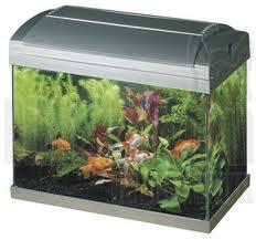 Aquarium opstarten stappenplan